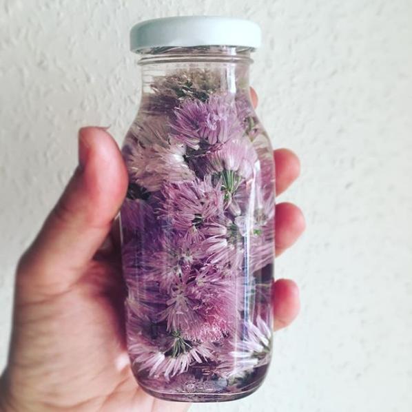 Instagram Schnittlauchblütenessig