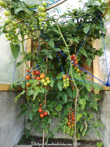 Tomaten des Inschennörs